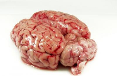 otak sapi